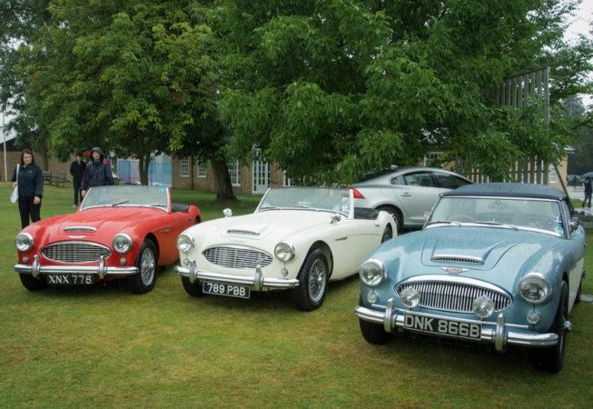 3 Austin Healey cars
